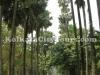 Botanic garden, Shibpur