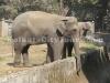 Elephant at Zoo, Kolkata