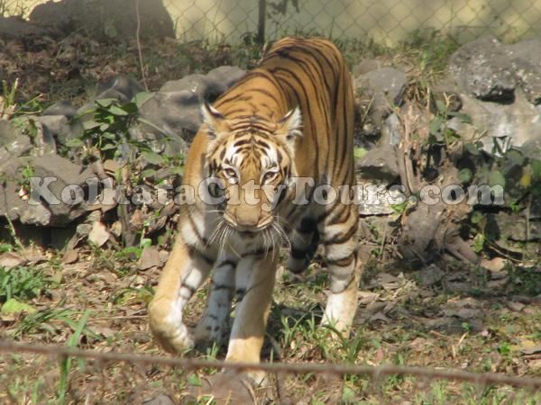 Zoological Garden Kolkata City Tours