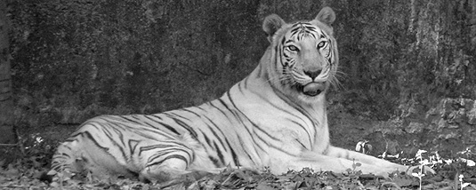 Zoological Garden, Alipore Kolkata