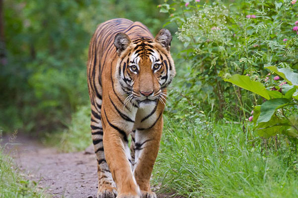 One day Sundarban tour from Kolkata
